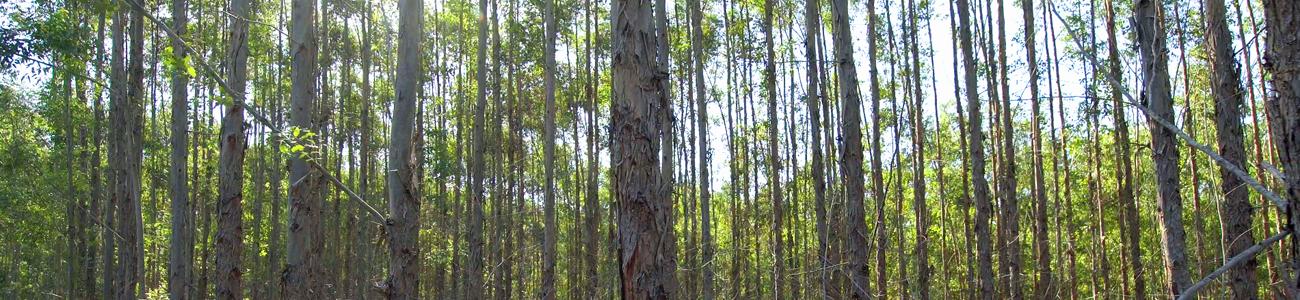 banner-fornecedor-florestal